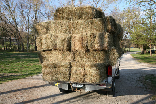 hay_stacking_8_550.jpg